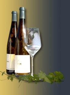 Weingut Rainer Wess - Grüner Veltliner Terassen 2007